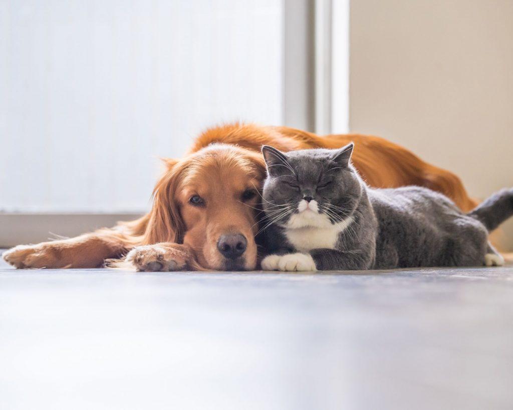USPCA Pet Pledge