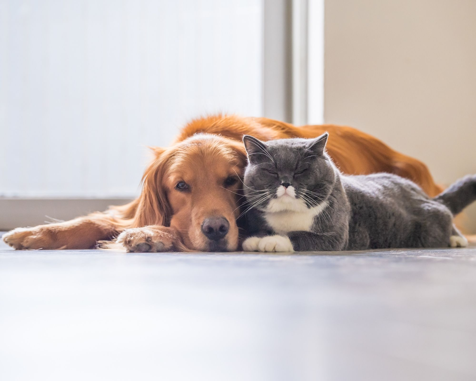 USPCA's Pet Pledge